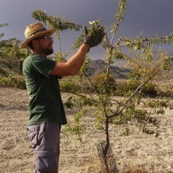 Late July / Early Sept is Almond gathering