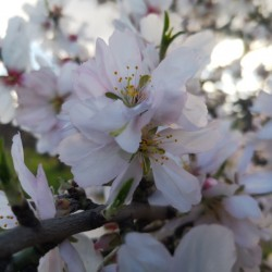 The blossom here from February is beautiful